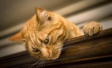 """Illustration : """"Selon cette étude, le caractère de votre chat serait le reflet du vôtre ! """""""