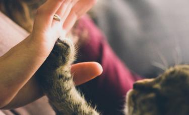"""Illustration : """"L'arrivée d'un bébé et le chat"""""""