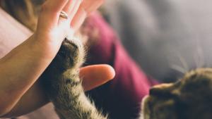 Illustration : L'arrivée d'un bébé et le chat