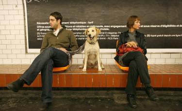 """Illustration : """"Comment voyager avec son chien dans les transports en commun ?"""""""