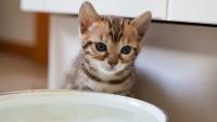 Illustration : Faire cohabiter un chat avec un chaton
