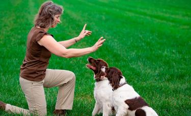 """Illustration : """"Comment apprendre des ordres à son chien ?"""""""