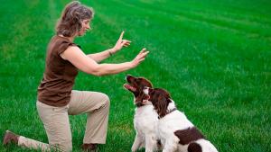 Illustration : Comment apprendre des ordres à son chien ?