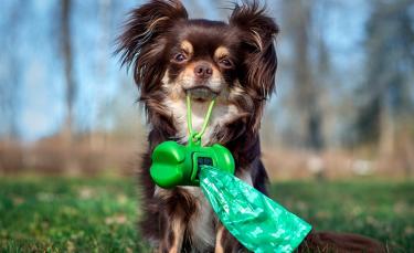 """Illustration : """"Apprendre la propreté à un chien adulte"""""""