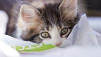 Illustration : Bien accueillir un chaton à son domicile