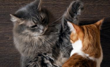 "Illustration : ""Comprendre et calmer un chat agressif"""