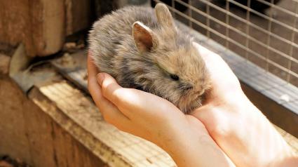 Illustration : Quinze lapins nains découverts en pleine forêt, abandonnés et apeurés. Une famille les prend en charge