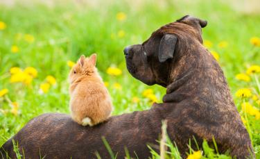 """Illustration : """"La cohabitation entre le lapin et le chien"""""""