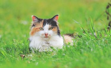 """Illustration : """"Pourquoi mon chat mange-t-il de l'herbe ?"""""""