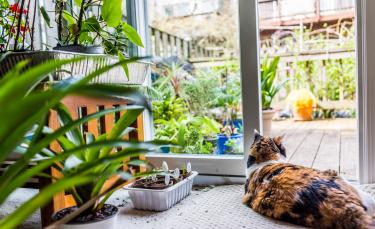 """Illustration : """"Sécuriser l'appartement ou la maison pour le chat"""""""