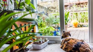 Illustration : Sécuriser l'appartement ou la maison pour le chat