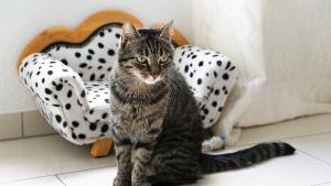 Illustration : 10 signes de stress chez votre chat