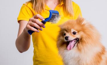 """Illustration : """"La brosse pour chien"""""""