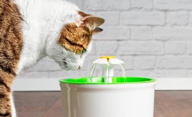 """Illustration : """"La fontaine à eau pour chat"""""""