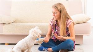 Illustration : Quels sont les tarifs d'un pet-sitter ?