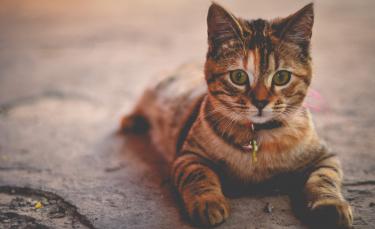 """Illustration : """"Les meilleurs noms en P pour un chat"""""""