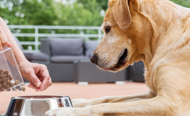 """Illustration : """"L'alimentation bio pour chien"""""""