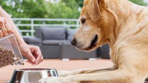 Illustration : L'alimentation bio pour chien