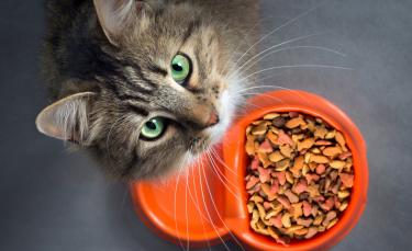 """Illustration : """"Pourquoi choisir une alimentation bio pour son chat ?"""""""