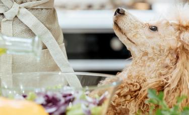 """Illustration : """"Idées de recettes fait maison pour chien"""""""
