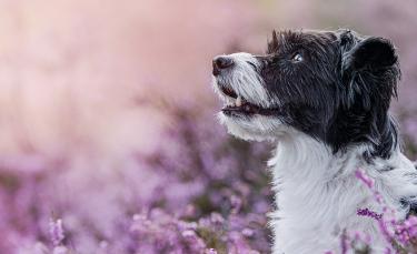 """Illustration : """"La médecine naturelle pour soigner son chien"""""""