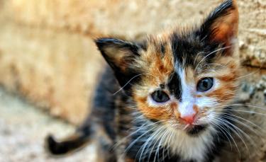 """Illustration : """"Pourquoi mon chat bave ?"""""""