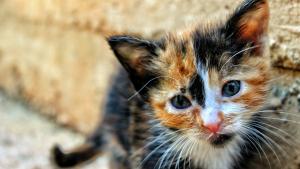 Illustration : Pourquoi mon chat bave ?