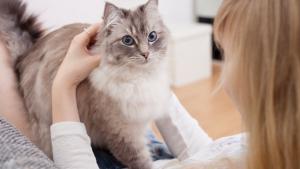 Illustration : Quelle est l'espérance de vie de mon chat ?