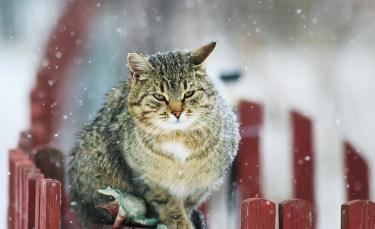 """Illustration : """"Pourquoi mon chat éternue ?"""""""