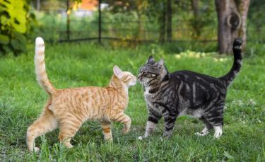 """Illustration : """"Votre chat parle-t'il ? : le langage du chat"""""""
