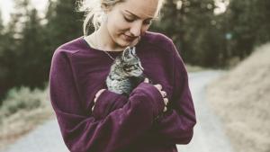 Illustration : L'hyperattachement chez le chat