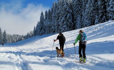 """Illustration : """"Voyager avec son chien à la montagne en hiver"""""""