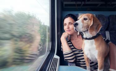 """Illustration : """"Chats et chiens autorisés dans les transports en commun toulousains ? C'est la proposition du Parti Animaliste, candidat aux municipales"""""""