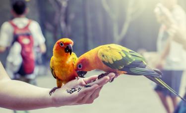"""Illustration : """"Les aliments toxiques pour l'oiseau de compagnie"""""""