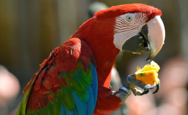 """Illustration : """"Les fruits et légumes pour l'oiseau de compagnie"""""""