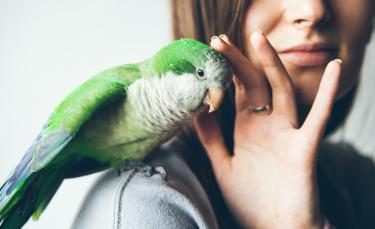 """Illustration : """"Choisir un oiseau de compagnie"""""""
