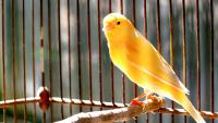 """Illustration : """"Choisir une cage pour un oiseau de compagnie"""""""