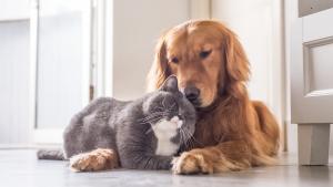 Illustration : Que devient votre animal en cas de divorce ?