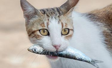 """Illustration : """"10 aliments dangereux pour le chat"""""""