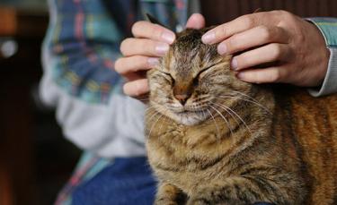 """Illustration : """"7 techniques pour masser son chat"""""""