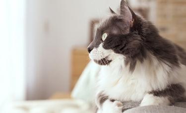 """Illustration : """"5 bienfaits scientifiques sur le fait d'avoir un chat"""""""