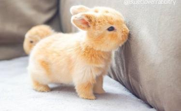 """Illustration : """"23 lapins tellement mignons qu'on aimerait les avoir avec nous"""""""