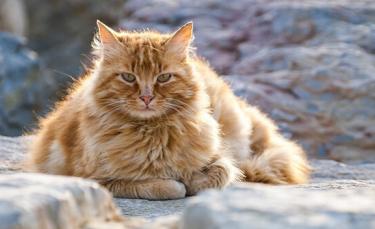 """Illustration : """"6 astuces pour combattre l'obésité de son chat"""""""
