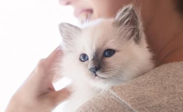 """Illustration : """"8 astuces pour aider son chat à vaincre le sentiment d'hyperattachement"""""""
