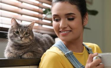 """Illustration : """"10 races de chats adaptées à la vie en appartement"""""""