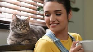 Illustration : 10 races de chats adaptées à la vie en appartement