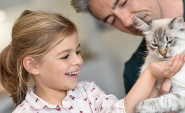 """Illustration : """"18 races de chats adaptées à la vie de famille"""""""