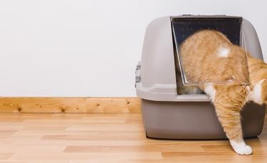 """Illustration : """"7 astuces pour enlever les odeurs d'urine de chat"""""""