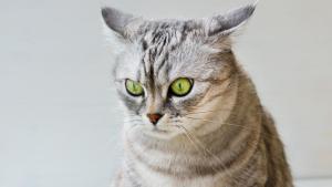 """Illustration : """"Le stress chez le chat"""""""