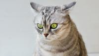Illustration : Le stress chez le chat